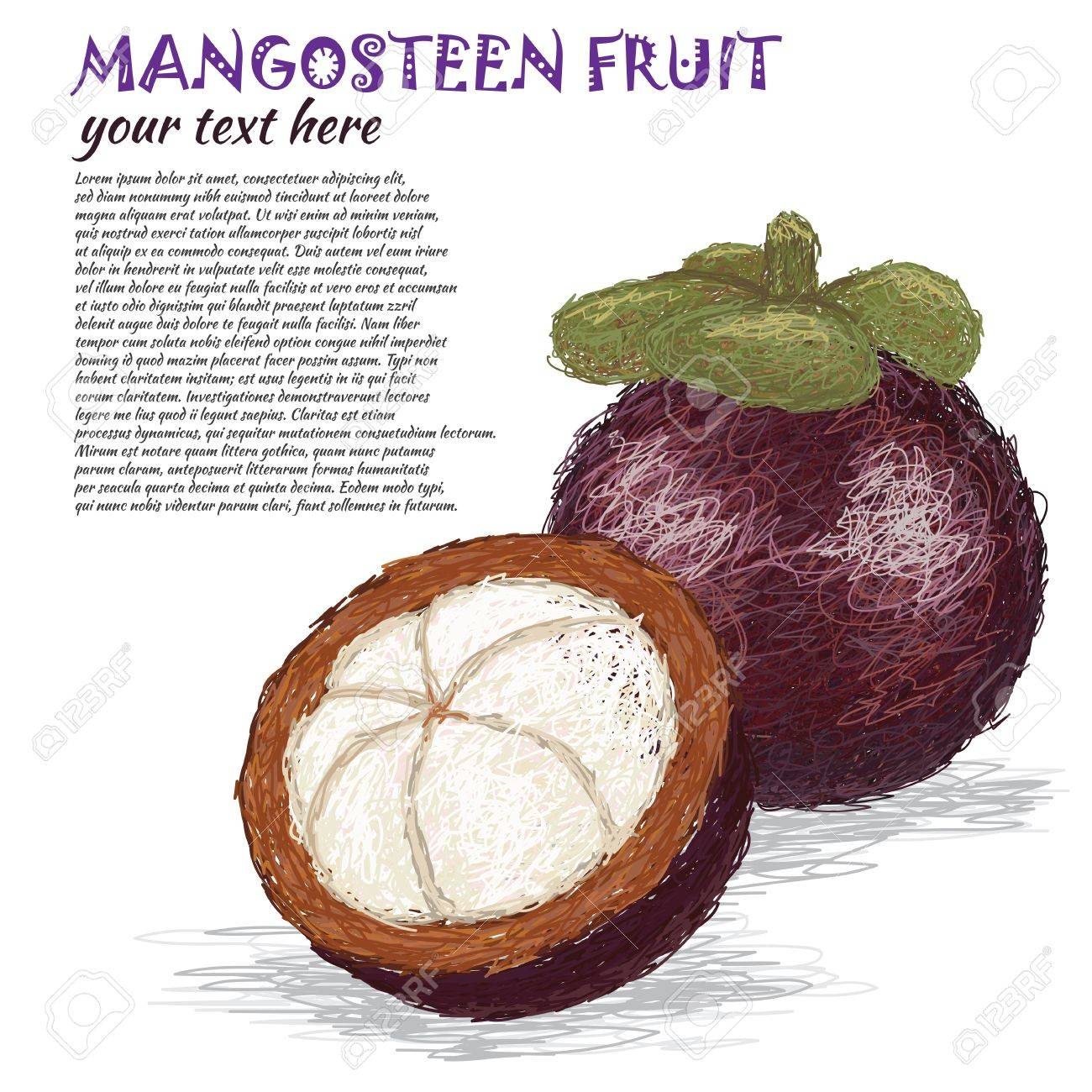 closeup illustration of fresh whole and half mangosteen fruit. Stock Vector - 14719288