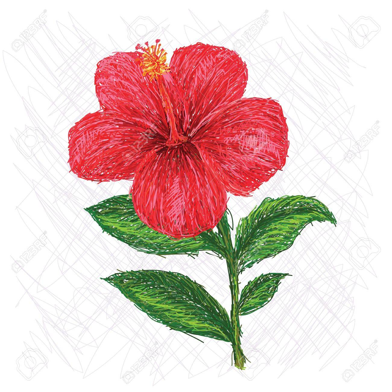 Unique style illustration of hibiscus flower scientific name unique style illustration of hibiscus flower scientific name hibiscus rosa sinensis stock vector 22026968 izmirmasajfo Image collections