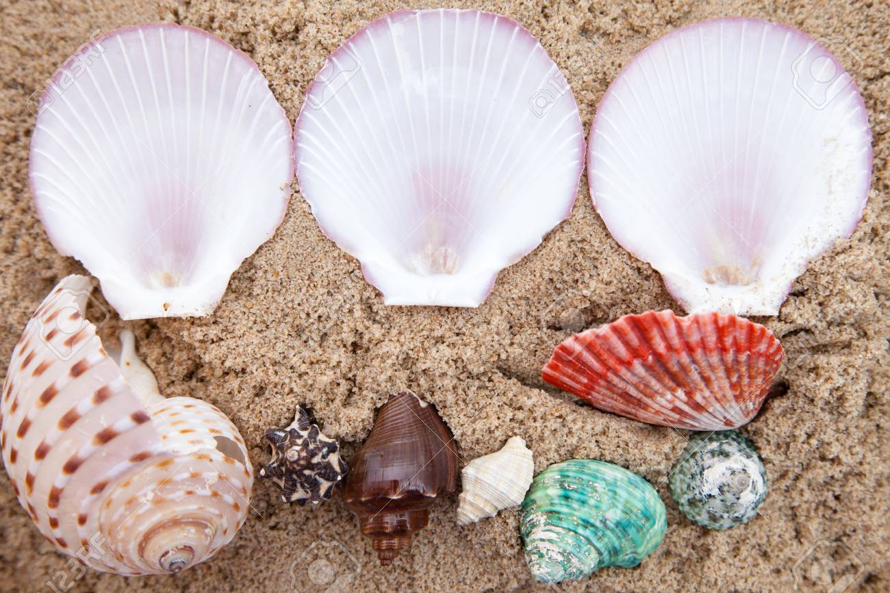 Shell on sand background Stock Photo - 13704379