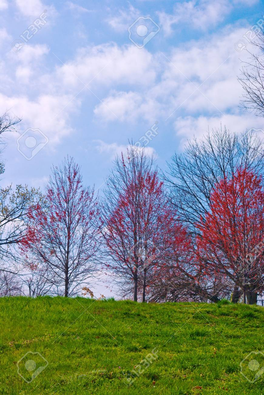 Springtime Grassy Hillside with Red Maple Trees Stock Photo - 3616950