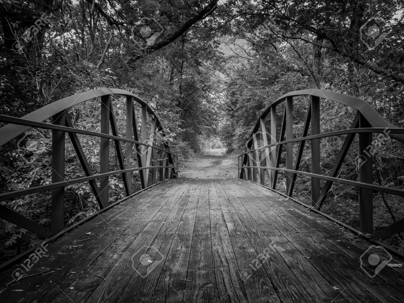 Legno Bianco E Nero : Foto gratis legno albero tramonto bianco e nero natura