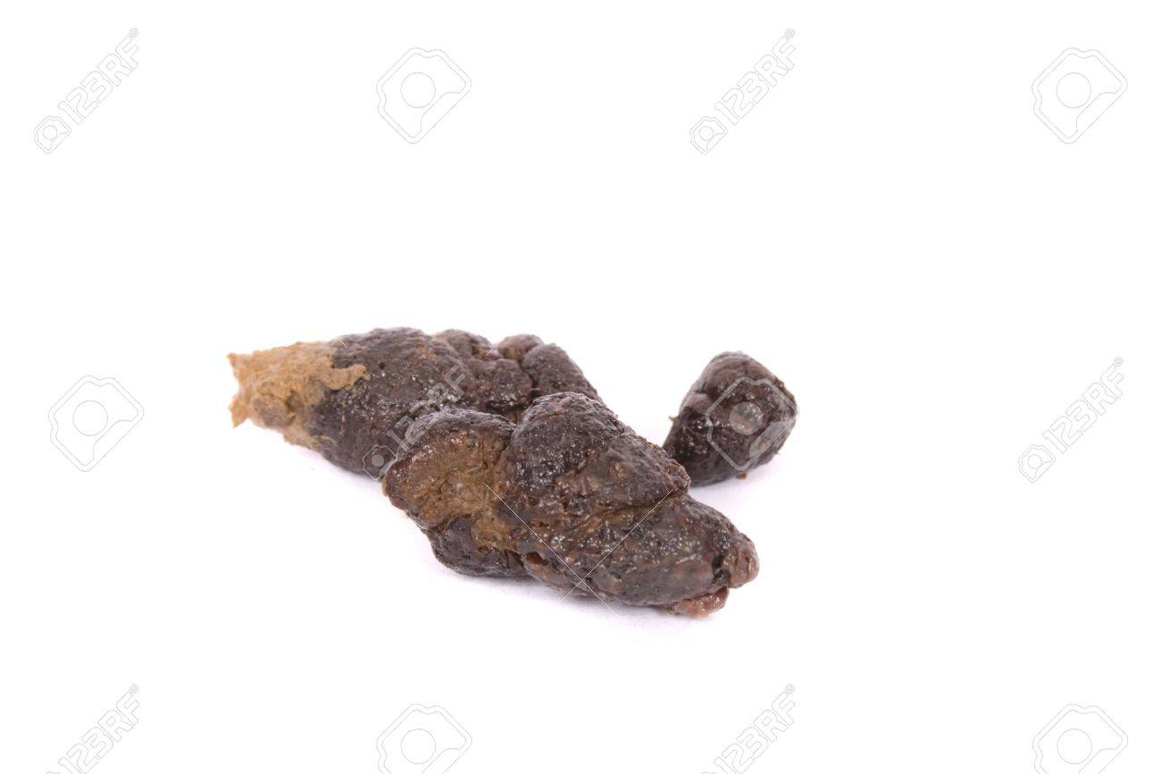 poo from dog Stock Photo - 1830880