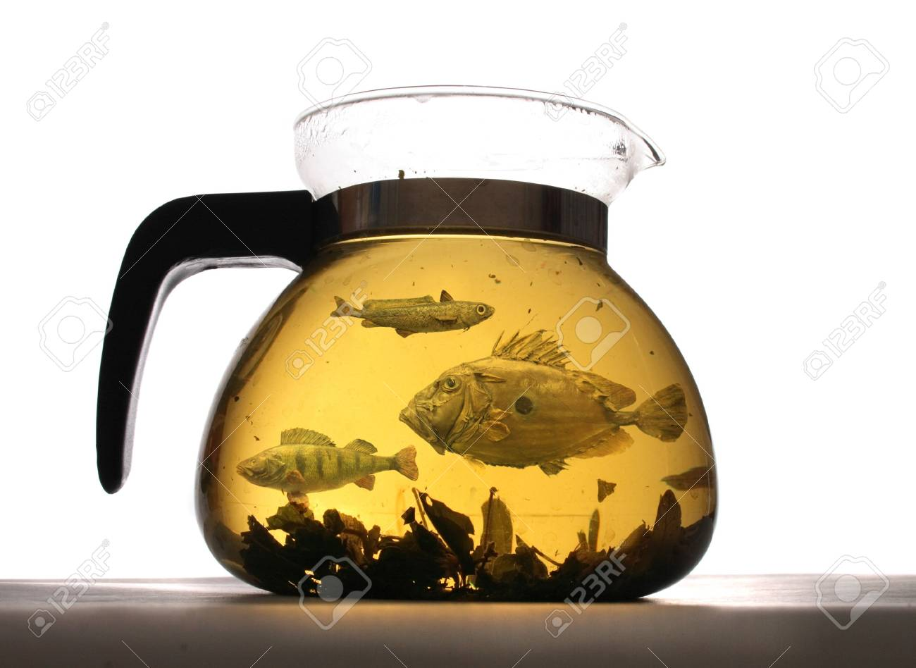 herbal tea with the exotic fishes on the white background Stock Photo - 4910676