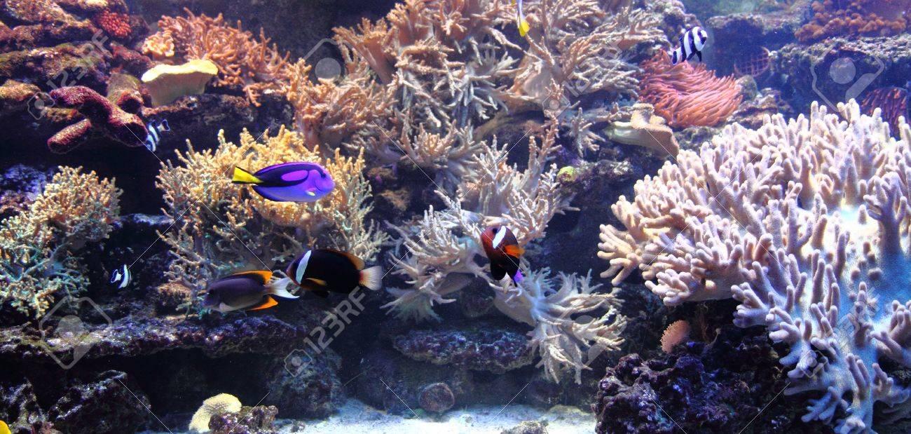 珊瑚海からのすてきな水族館の背...