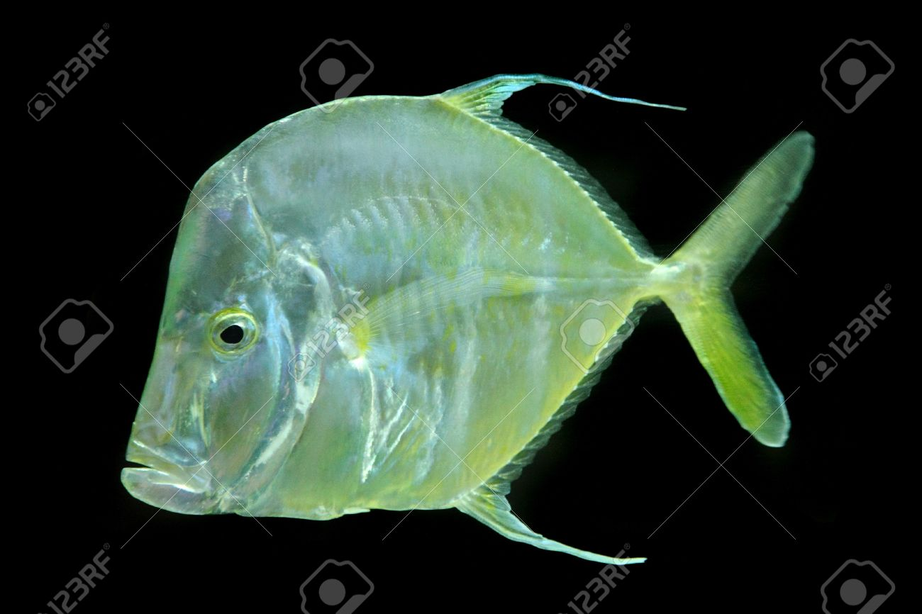 Color Exotic Fish From The Deep Sea Stock Photo, Picture And Royalty ...