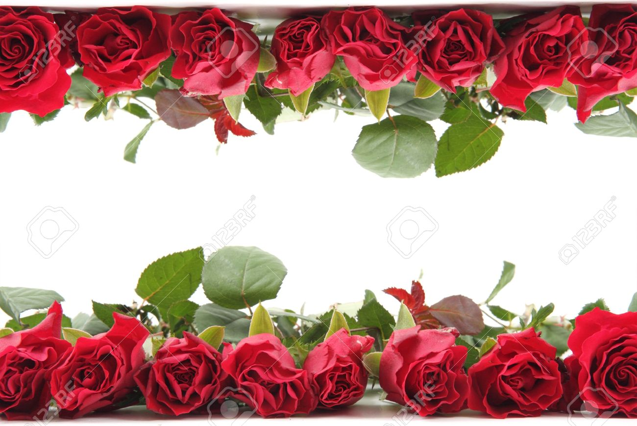 Fresh Red Roses As Frame Isolated On The White Background Stock ...