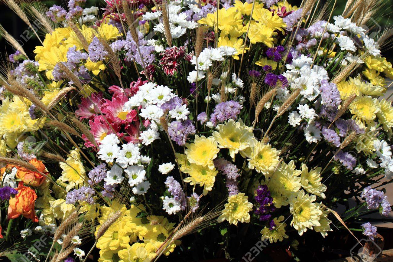 Nice Color Flowers As Natural Spring Background Stock Photo Picture