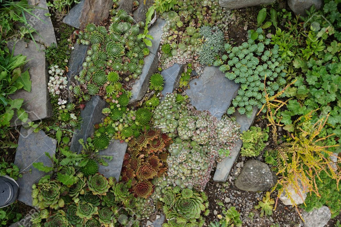 Small Succulent Garden As Nice Natural Background Stock Photo Picture And Royalty Free Image Image 70152311