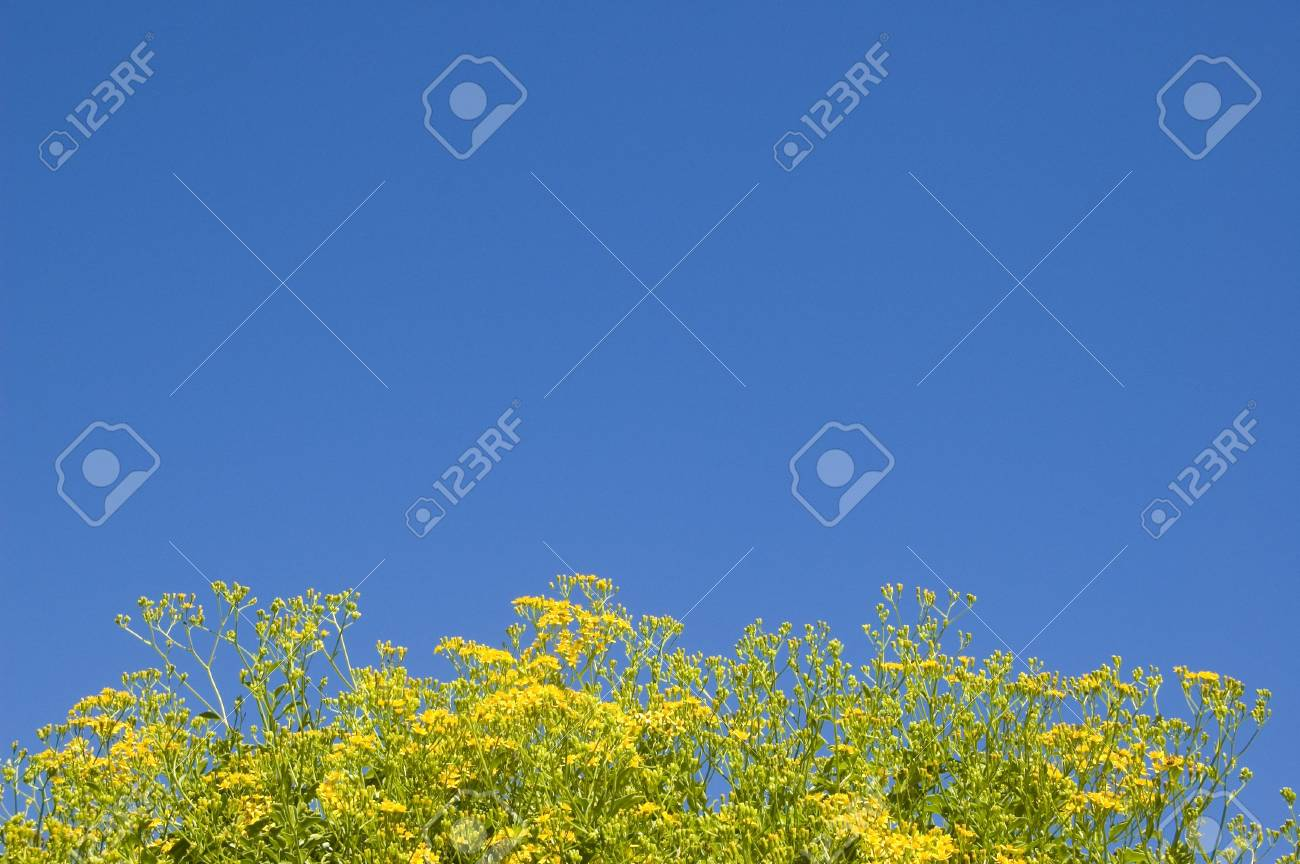 Yellow flower in blue sky background - good to adding picture into the blue space Stock Photo - 395082