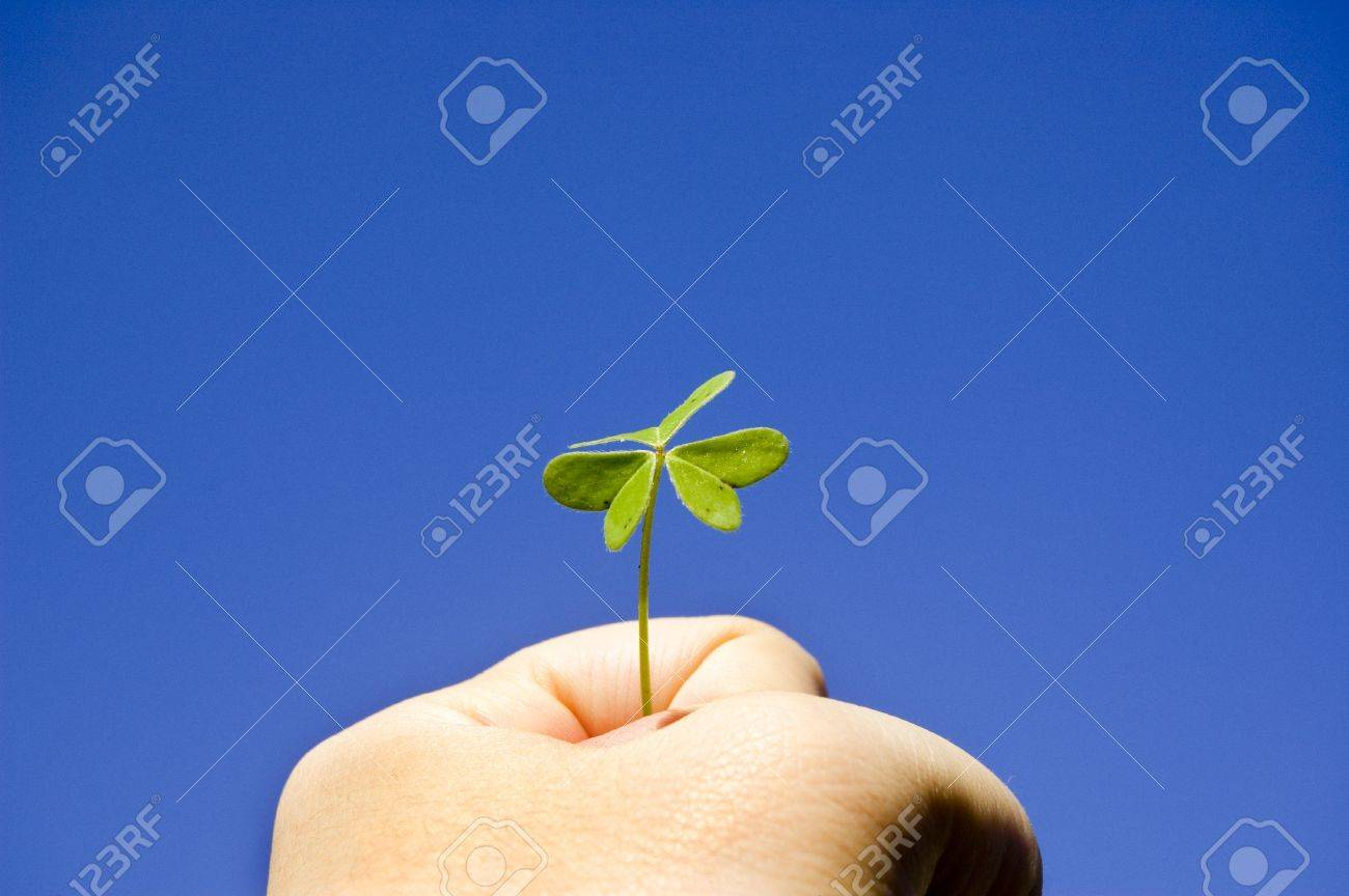 A Strong hand holding a clover under the sunny blue sky Stock Photo - 395076
