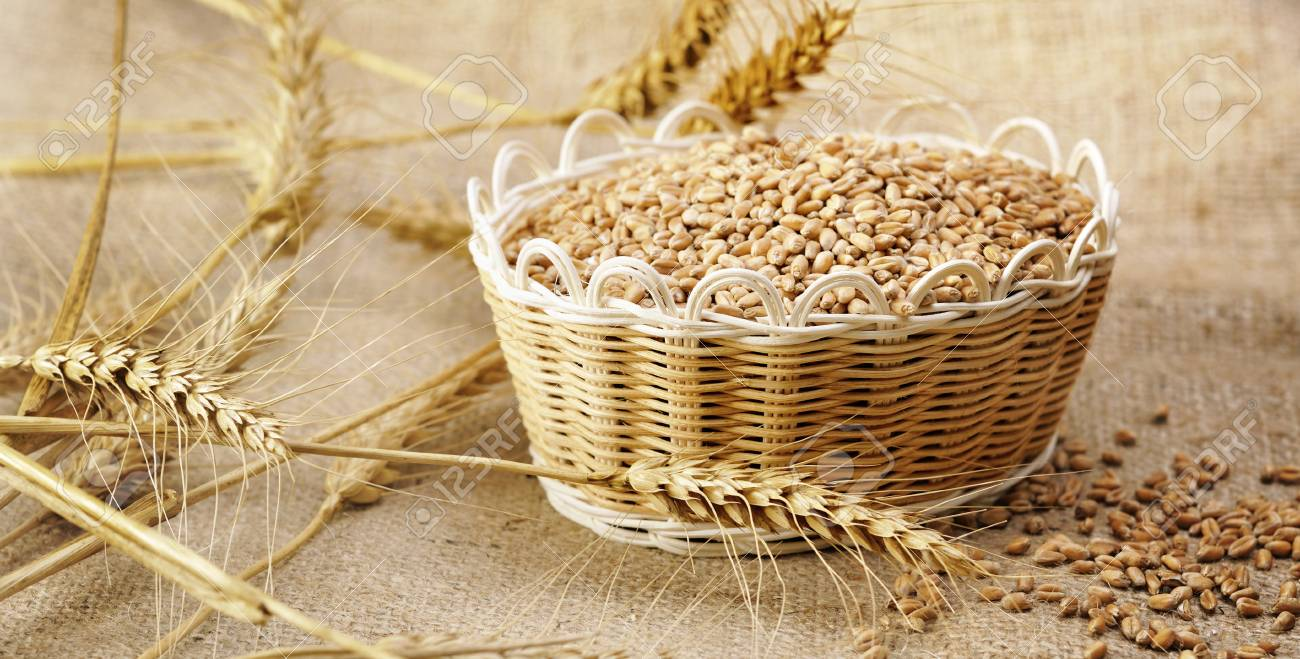 harvest wheat Stock Photo - 16481819
