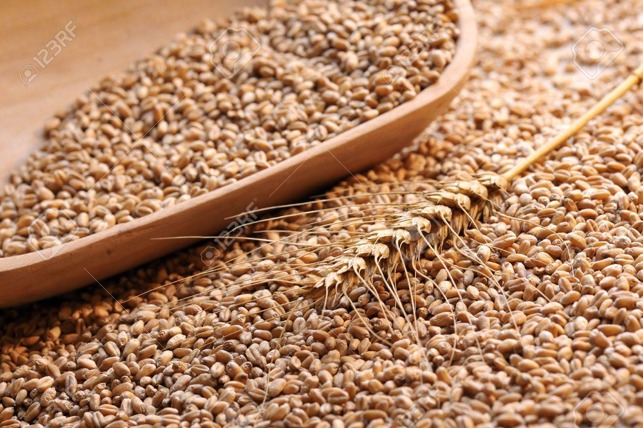 wheat bowl Stock Photo - 16482306