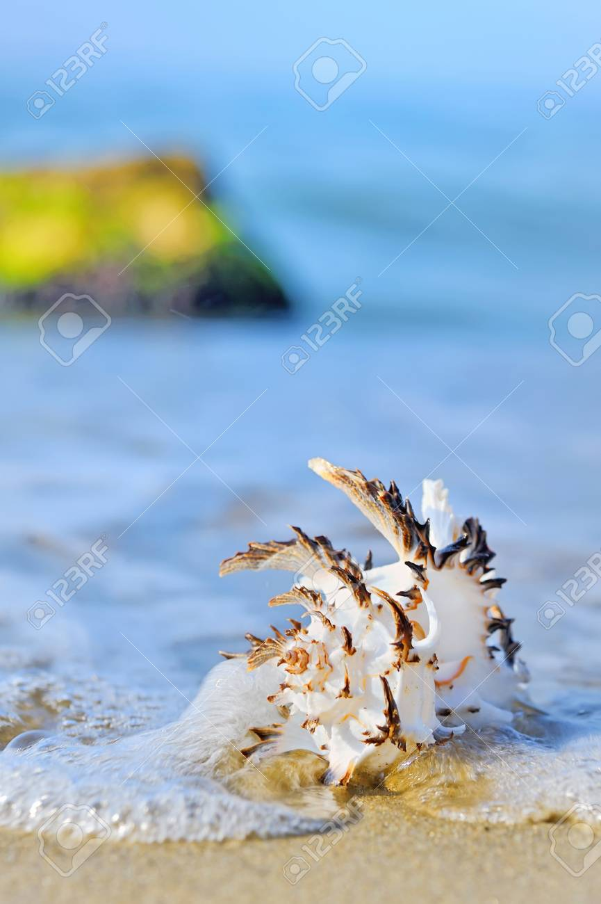 seashell on the seashore shoot in a natural background Stock Photo - 19715276