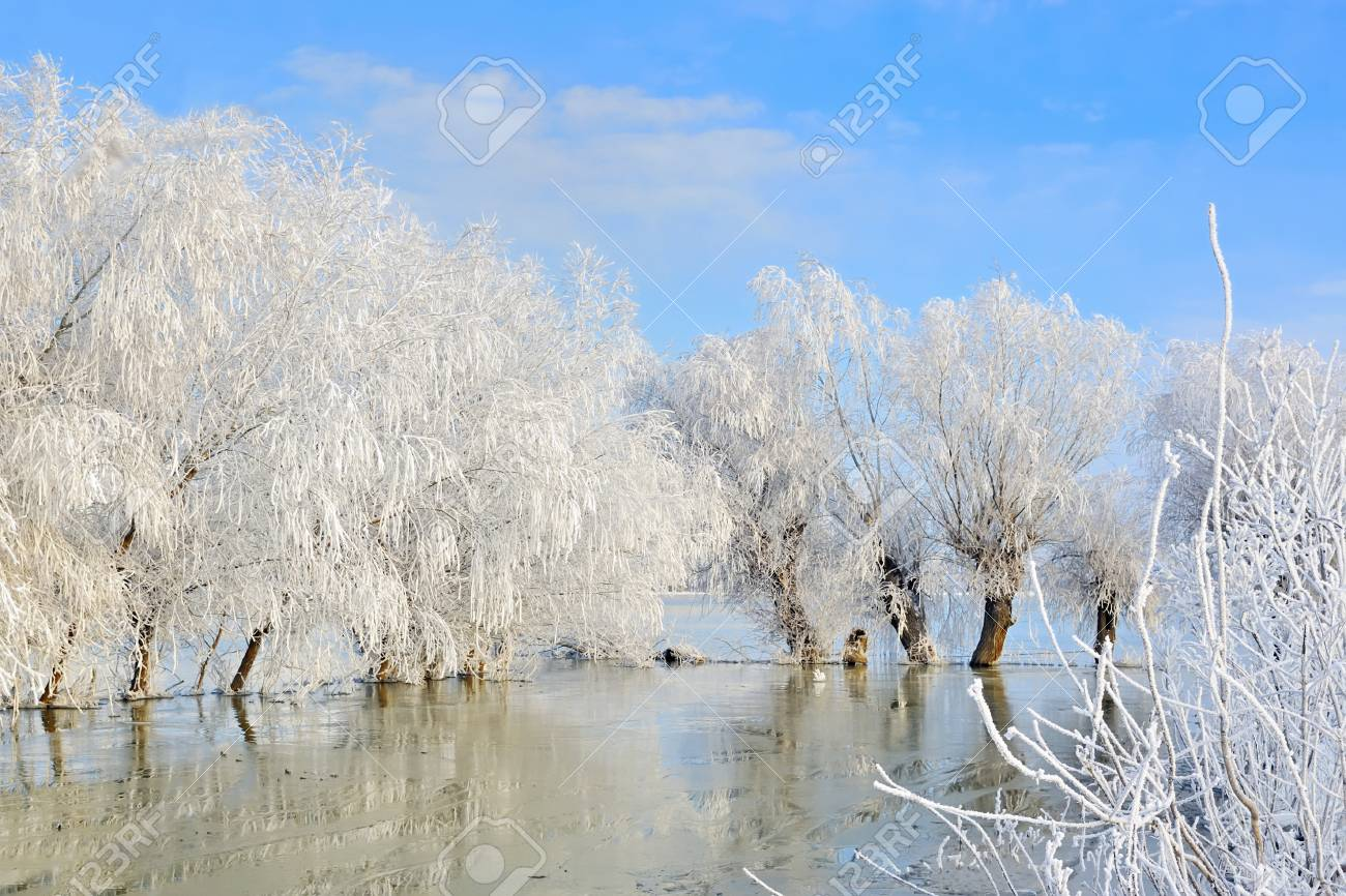 winter landscape with snow covered trees and river Stock Photo - 23812649