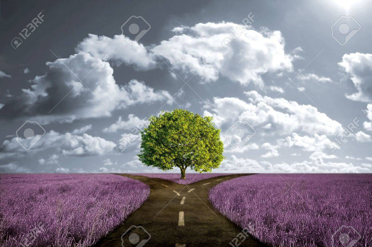 Crossroad in lavender meadow and with tree alone Stock Photo - 7326600