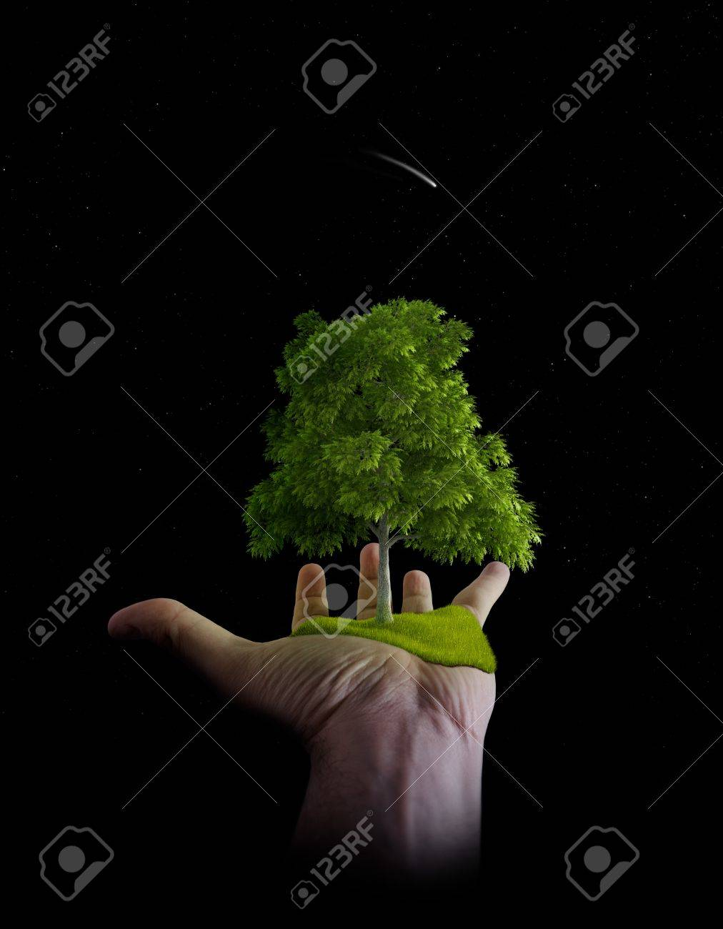 Tree and meadow in palm of hand Stock Photo - 12639449