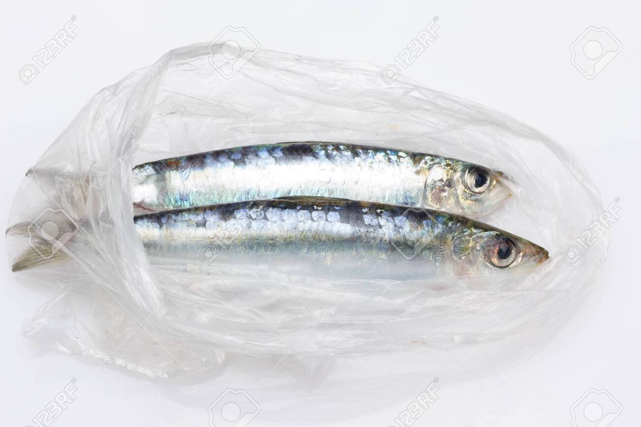 Sardine is a fish that is easily found in fishmongers, it is usually fished in the Mediterranean Sea and is common in the Mediterranean diet, healthy and full of Omega - 148436096