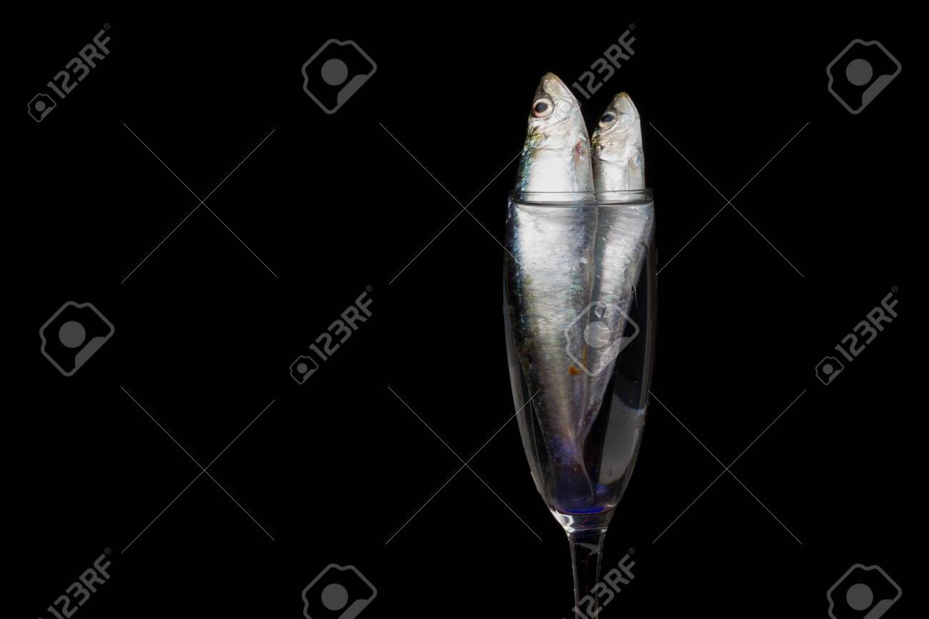 Sardine is a fish that is easily found in fishmongers, it is usually fished in the Mediterranean Sea and is common in the Mediterranean diet, healthy and full of Omega - 148435534