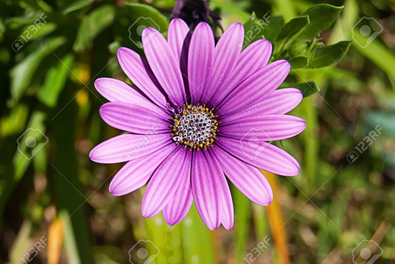 Fleur Nature Beau Yellowbeauty Banque D Images Et Photos Libres