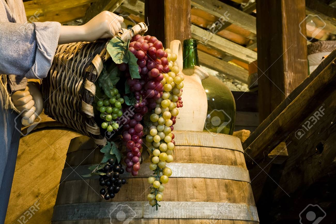 Clusters full of grapes recollected by farm worker. Stock Photo - 2206584