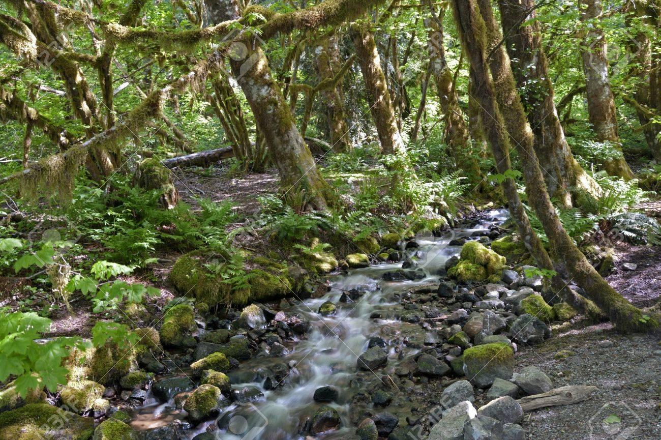 Dans le souffle du jour. 21296314-for%C3%AAt-tropicale-vierge-avec-terrain-avec-mousse-des-pierres-et-un-ruisseau