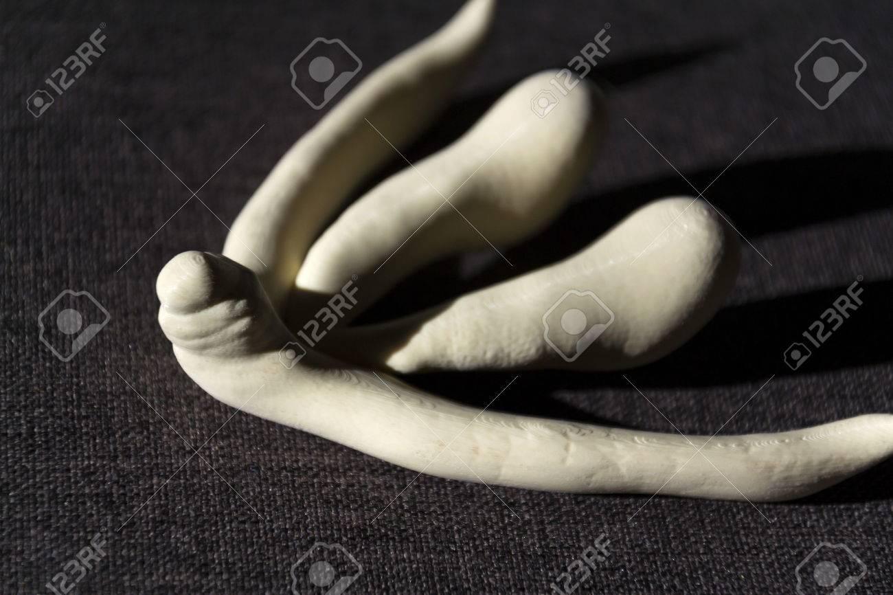 Female anatomy videos clitoris