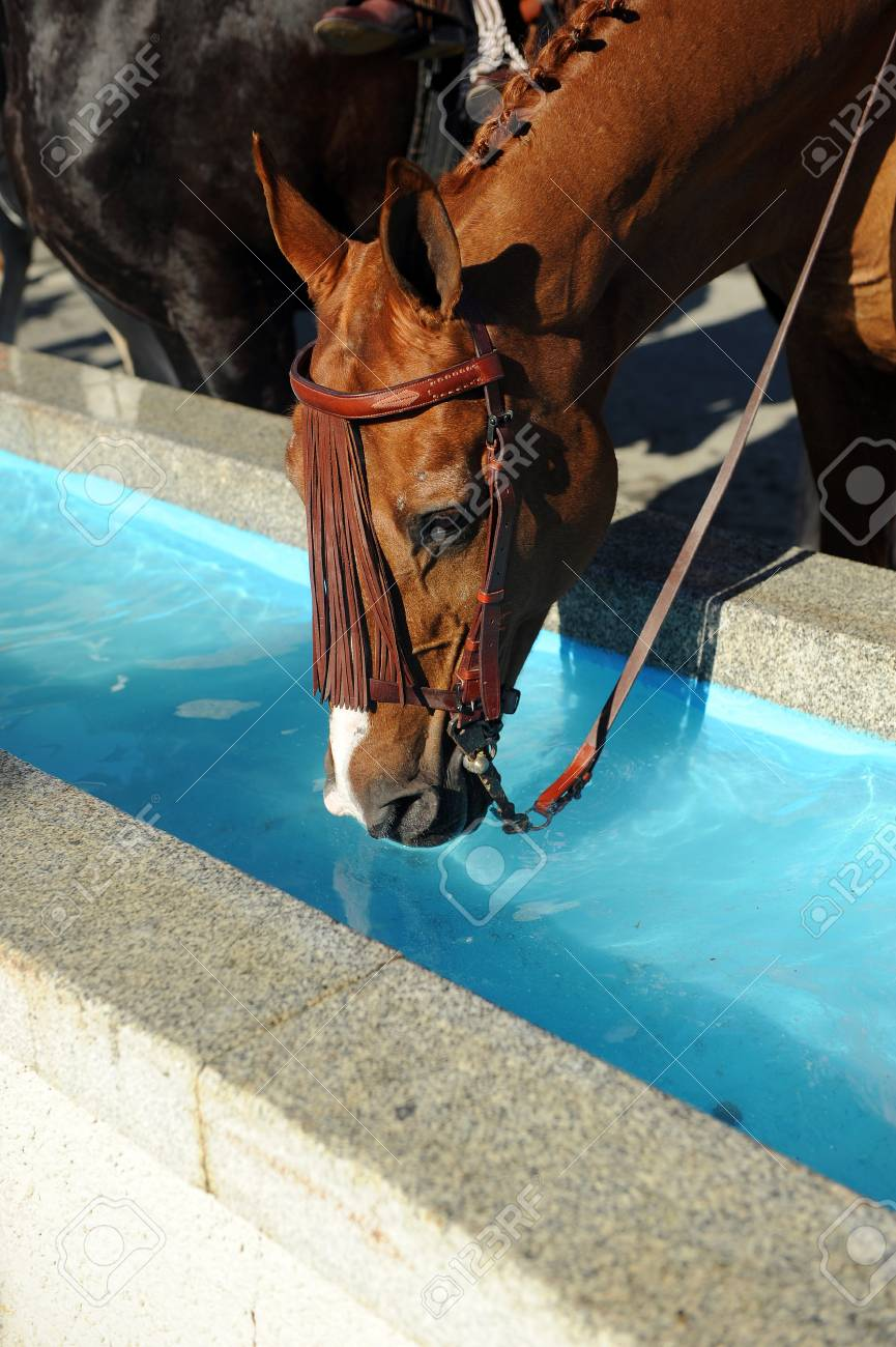 Horse drinking water at the trough - 69215651