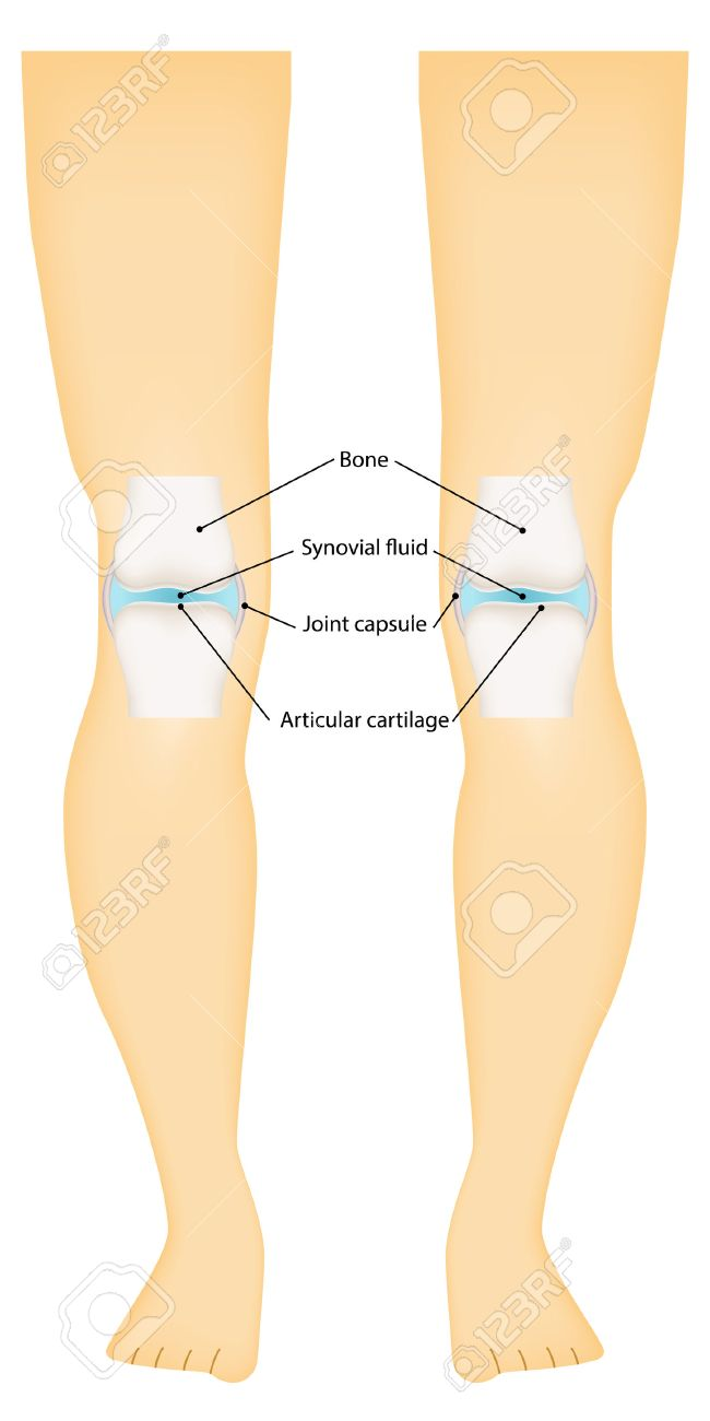 Knee Synovial Joint Labeled Royalty Free Cliparts, Vectors, And ...