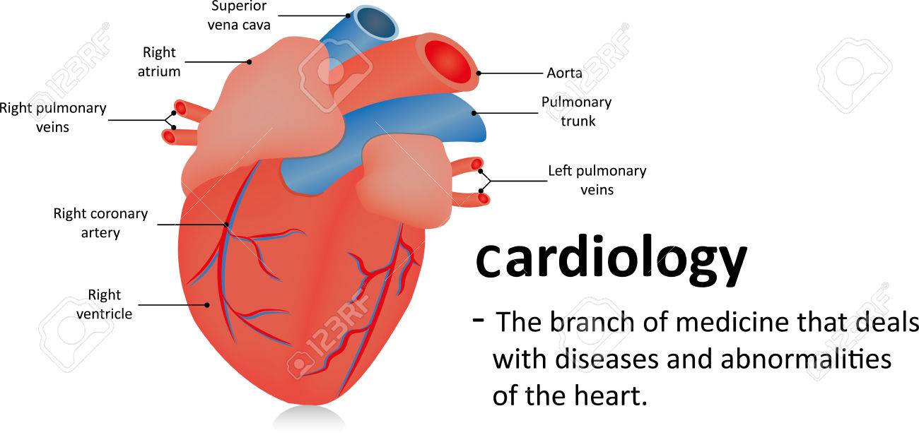Image result for cardiology definition""