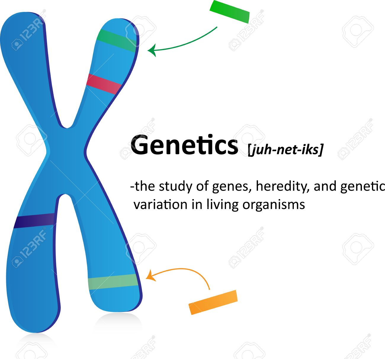 Genetics Definition Royalty Free Cliparts, Vectors, And Stock ...