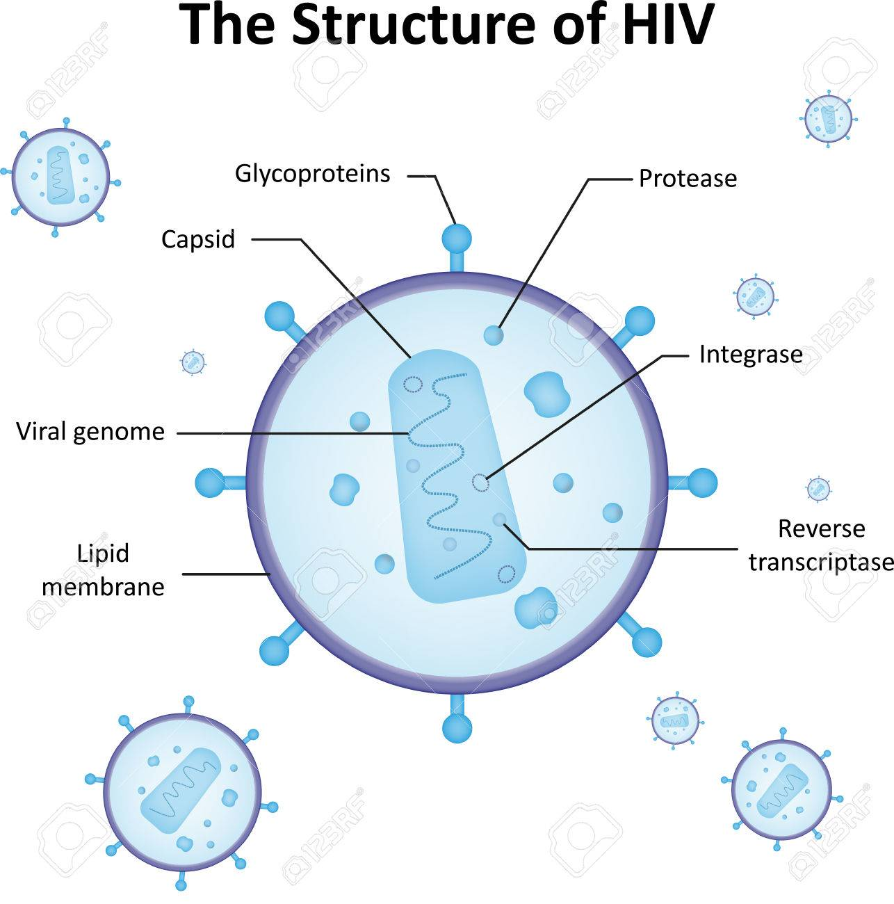 The Structure Of HIV Royalty Free Cliparts, Vectors, And Stock ...