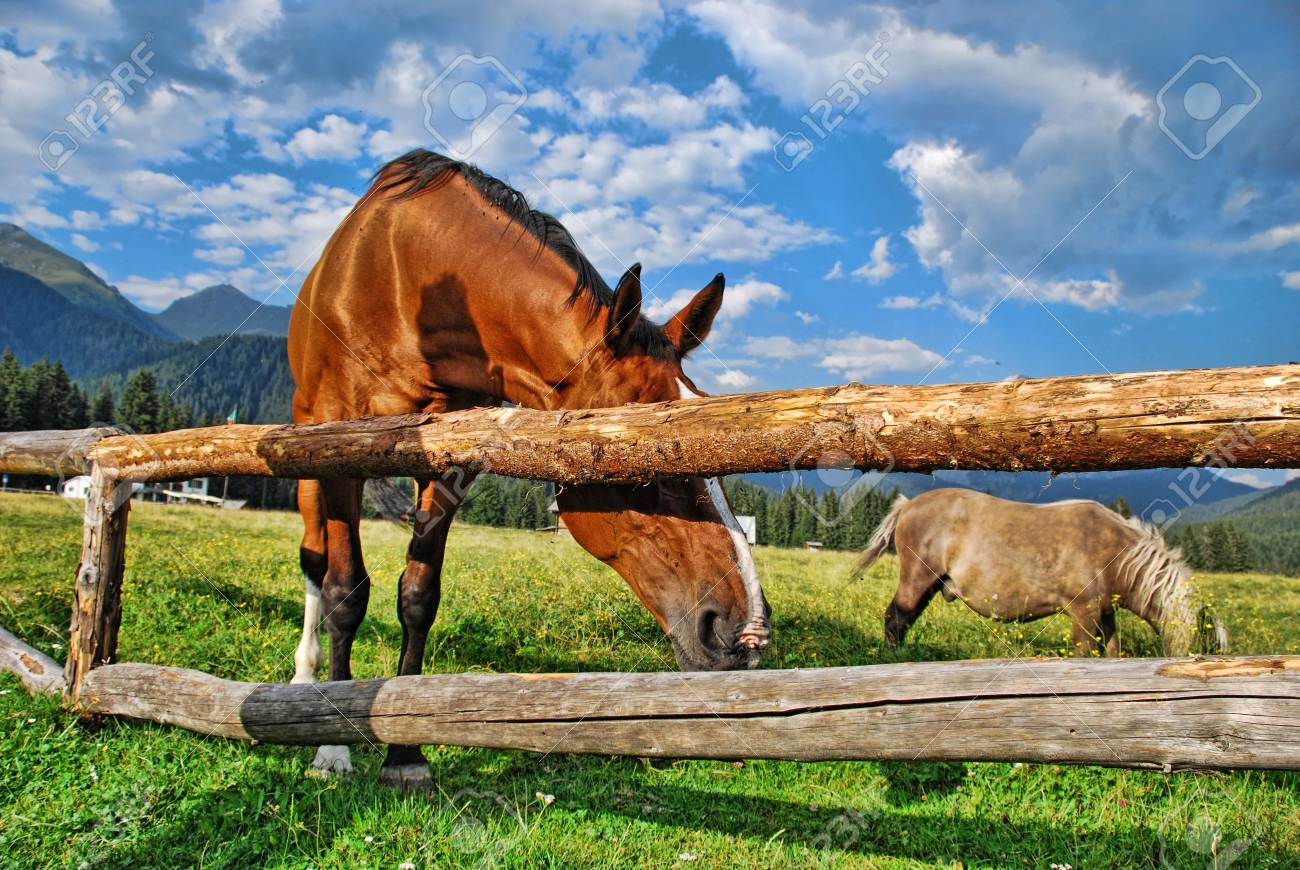 Grazing Horses in the Heart of Dolomites Mountains, Italy Stock Photo - 6715724