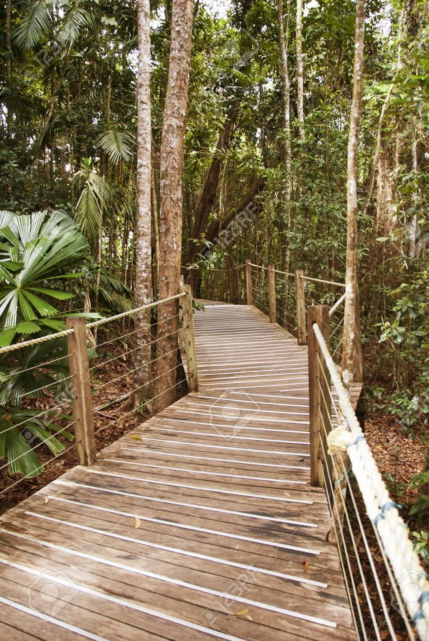 Rai n Forest near Kuranda Village, Queensland, Australia Stock Photo - 13981316