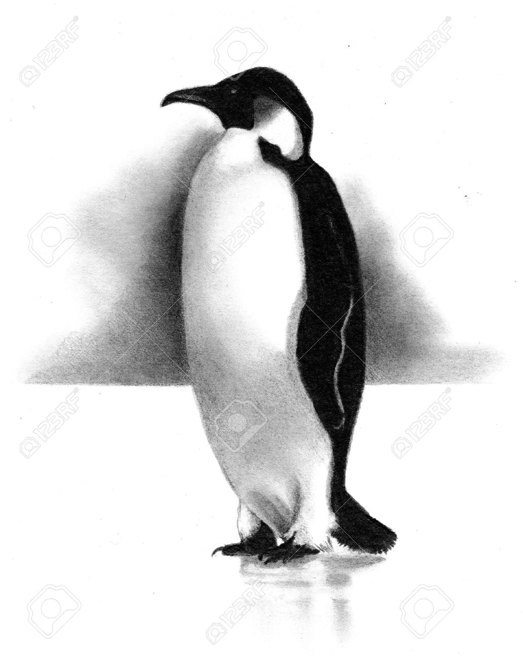 Freehand pencil drawing of penguin