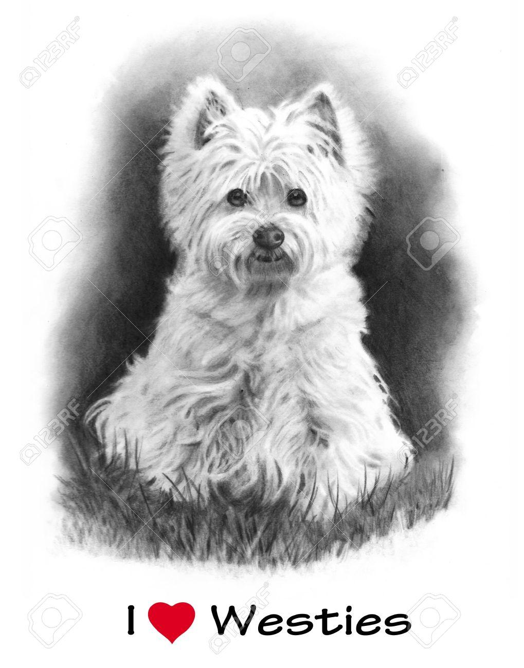 Dibujo De Lápiz De West Highland Terrier Perro Fotos Retratos