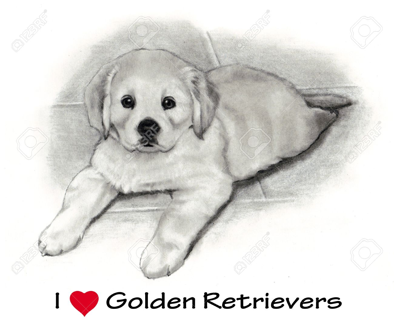 golden retriever puppy freehand pencil drawing stock photo 10880278