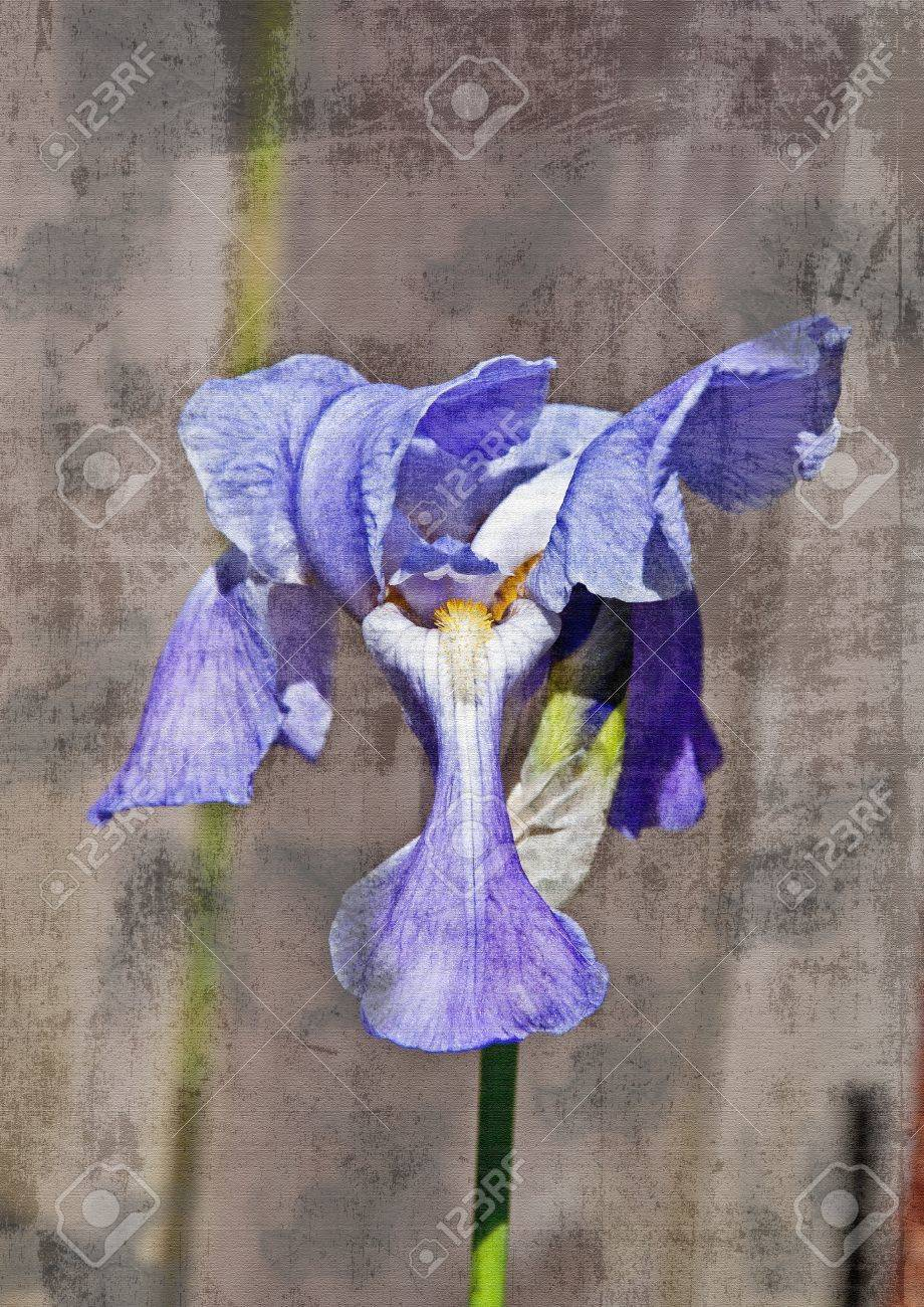 This is an artisic rendition of a purple japanese iris flower stock photo this is an artisic rendition of a purple japanese iris flower against a wood background and texturized in a vertical format izmirmasajfo