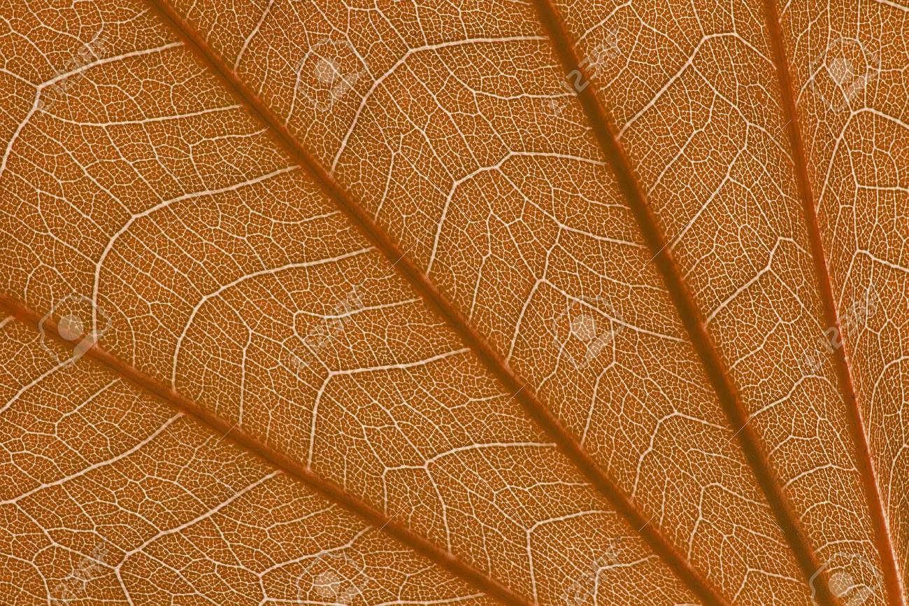 It Is Stem And Leaf Texture For Pattern Stock Photo Picture And Royalty Free Image Image 43213695