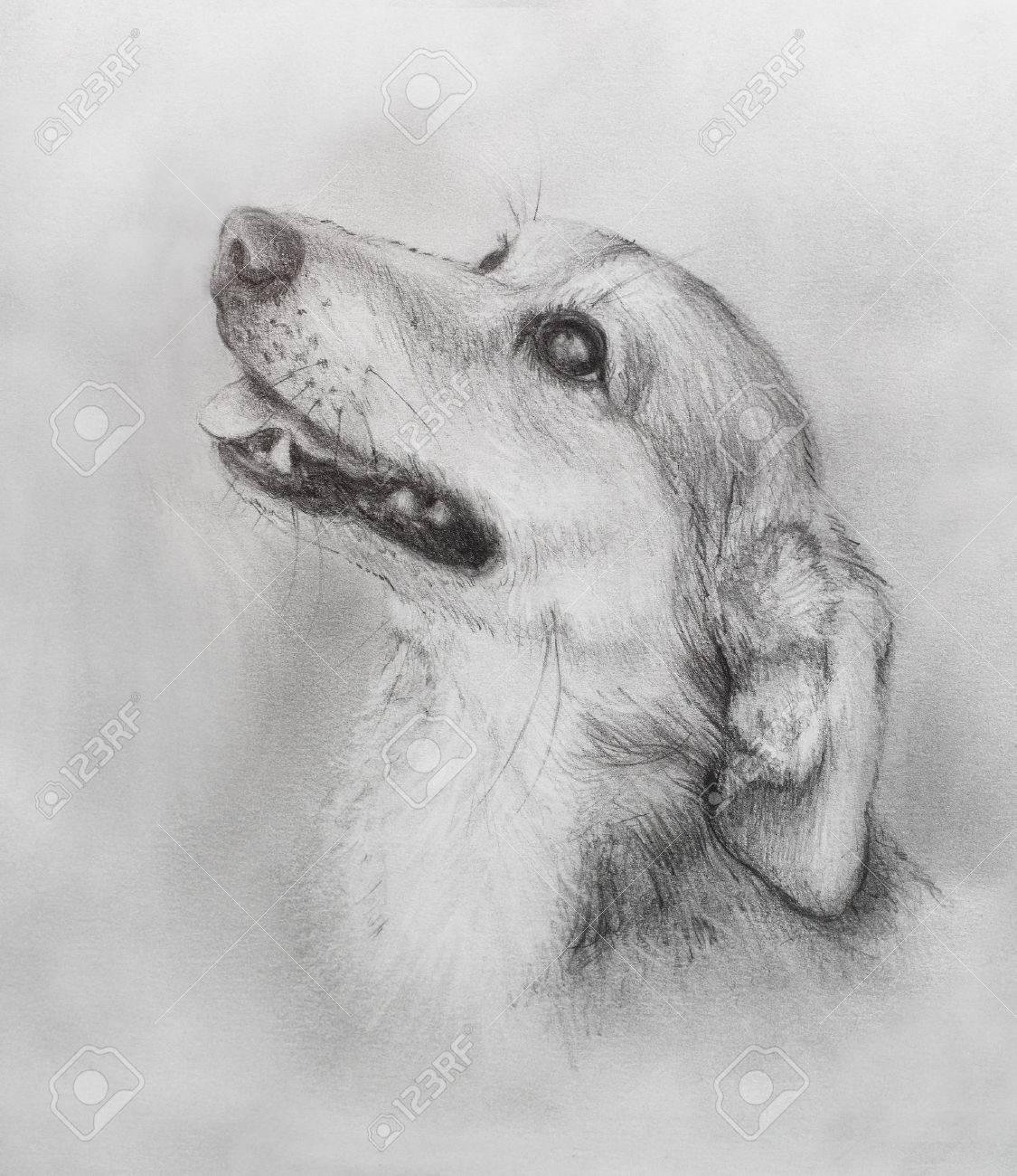 Dog pencil drawing on old paper vintage paper dog portrait