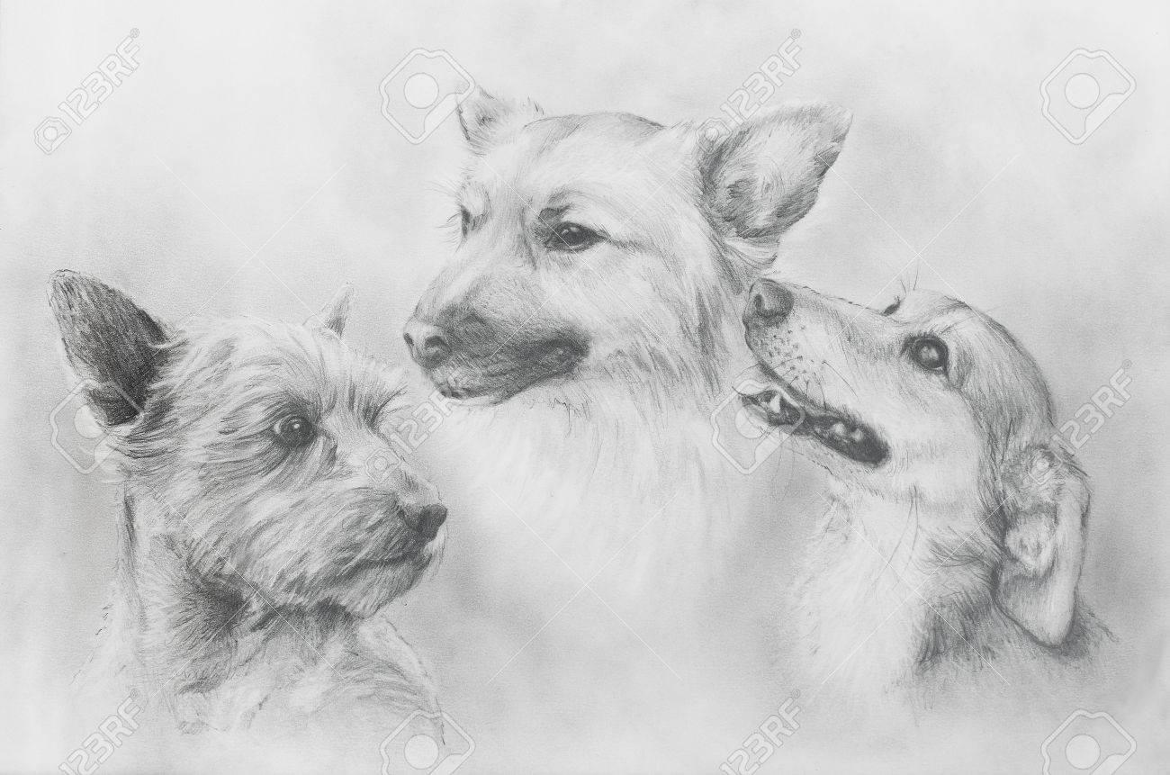 Perros Lápiz De Dibujo En El Papel Viejo Perros Retrato Retrato