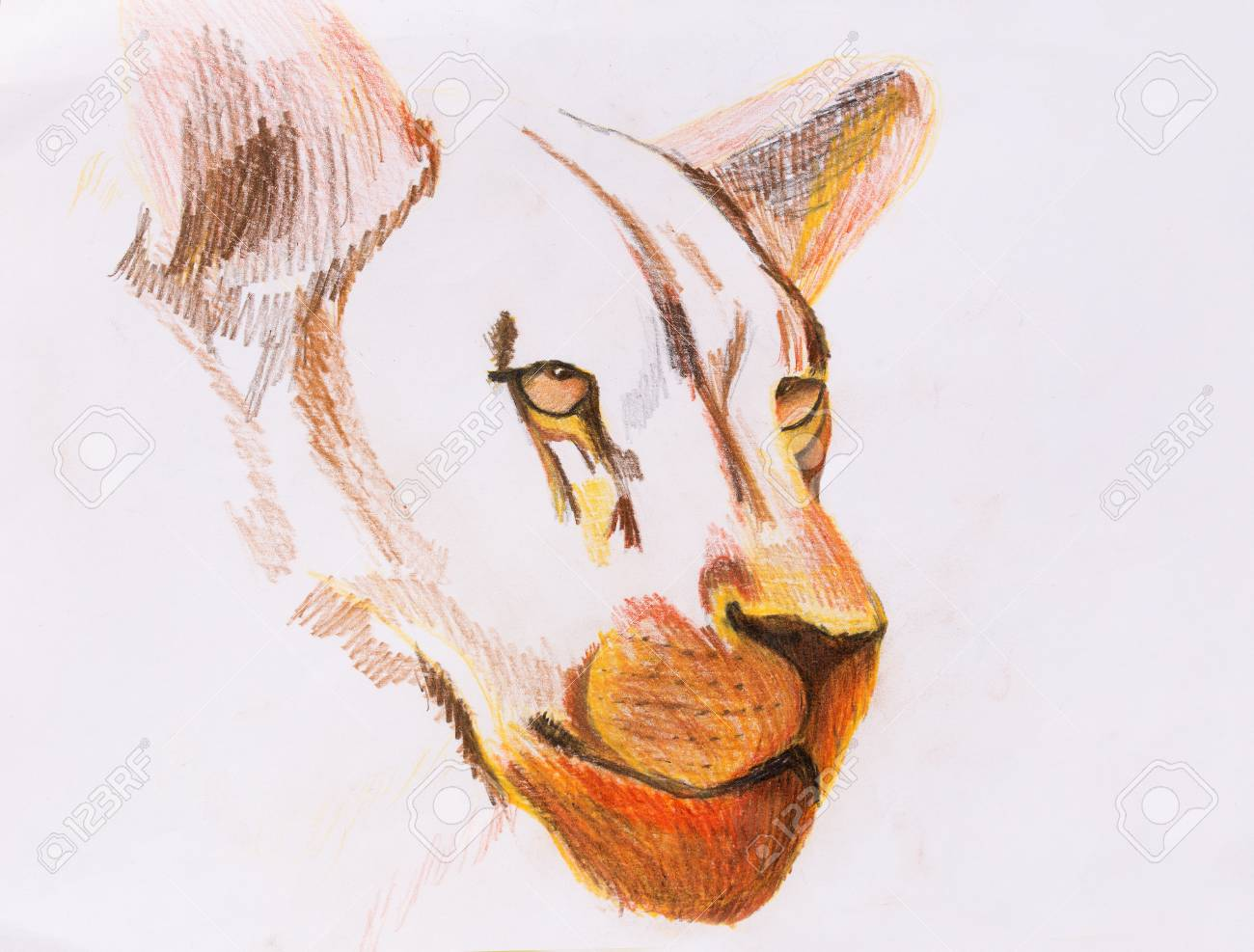 Pencil Drawing Drawing Lion On White Paper