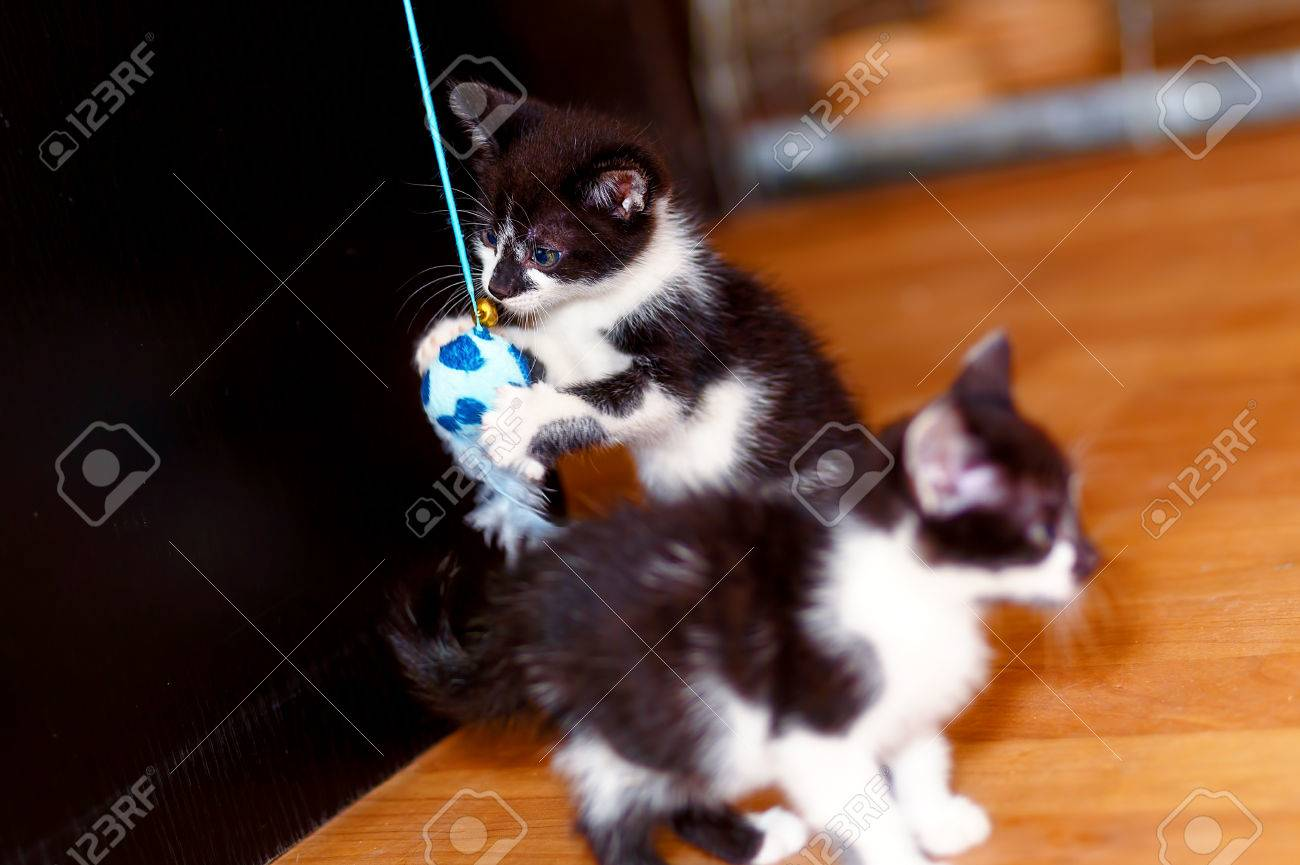 Sweet Little Baby Kittens Playing To her With A Toy Stock