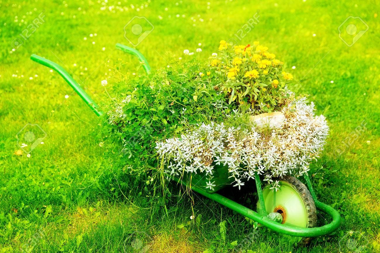 Decorative Garden Wheelbarrow With Bunch Of Plants On Green Grass ...