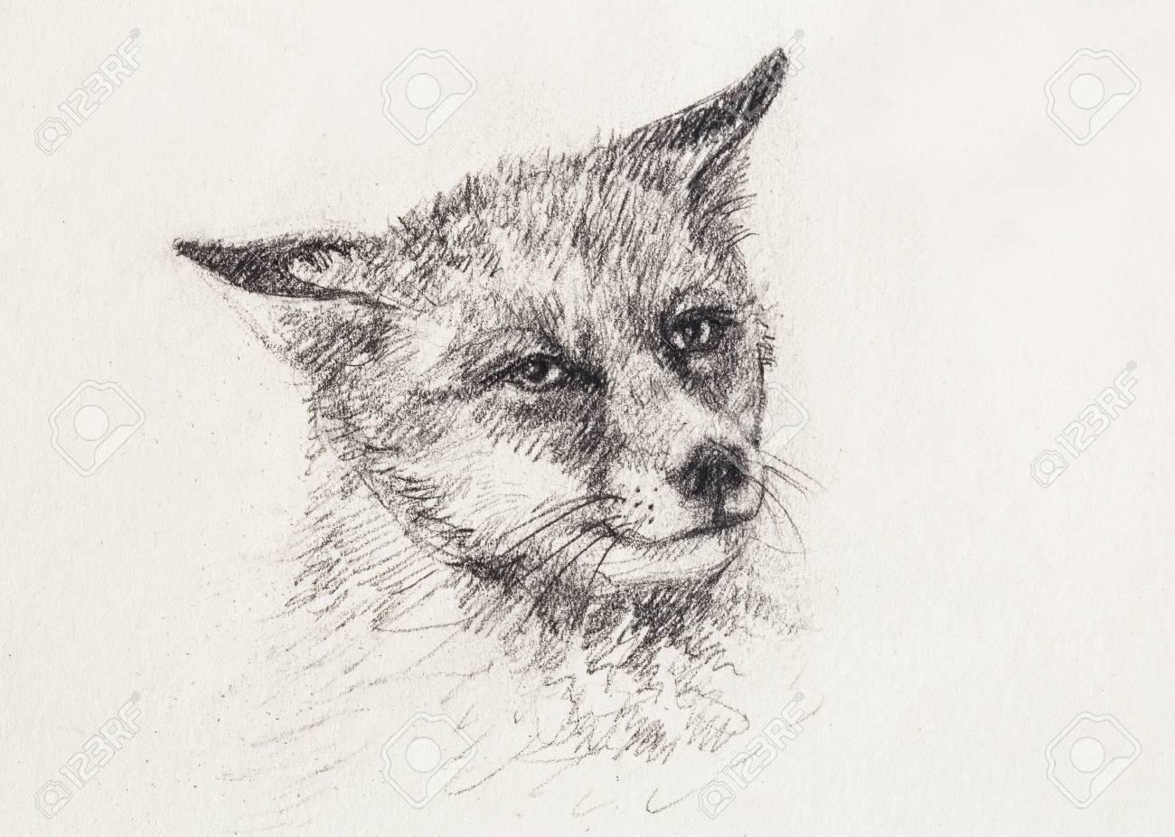 Fox Pencil Sketch