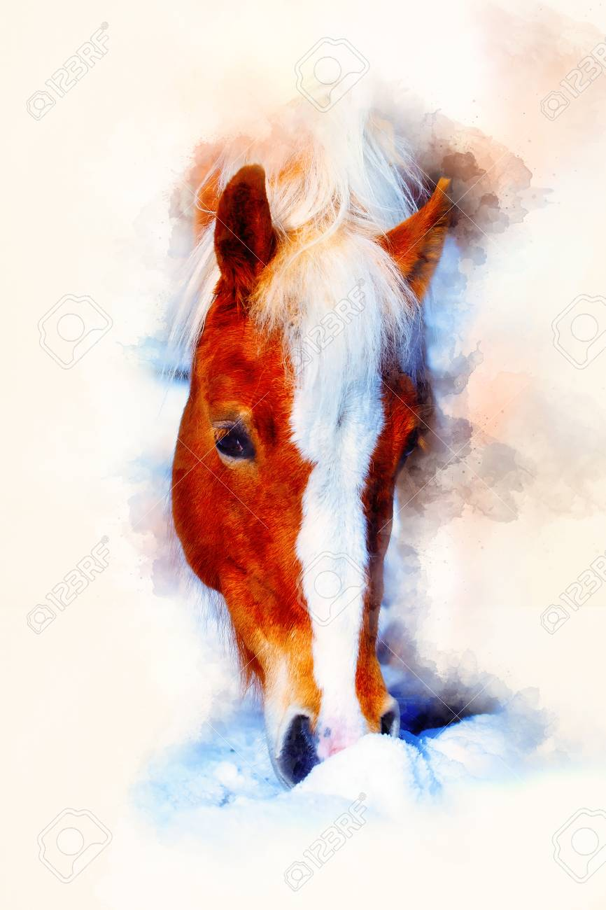 Horse Face And Softly Blurred Watercolor Background Horse Haflinger Stock Photo Picture And Royalty Free Image Image 97531907