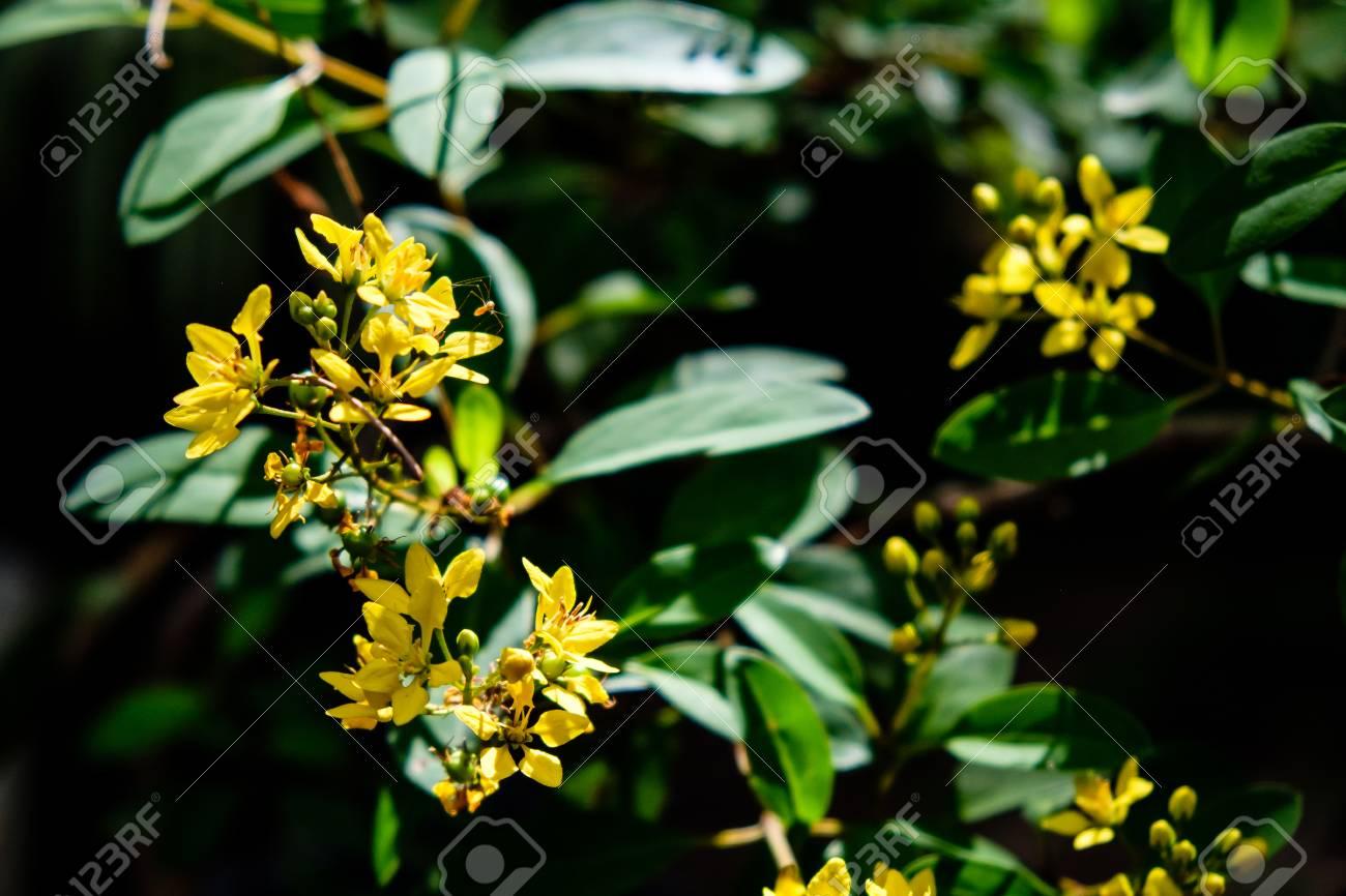 Plant With Yellow Flowers And Green Leaves The Best Plant 2018