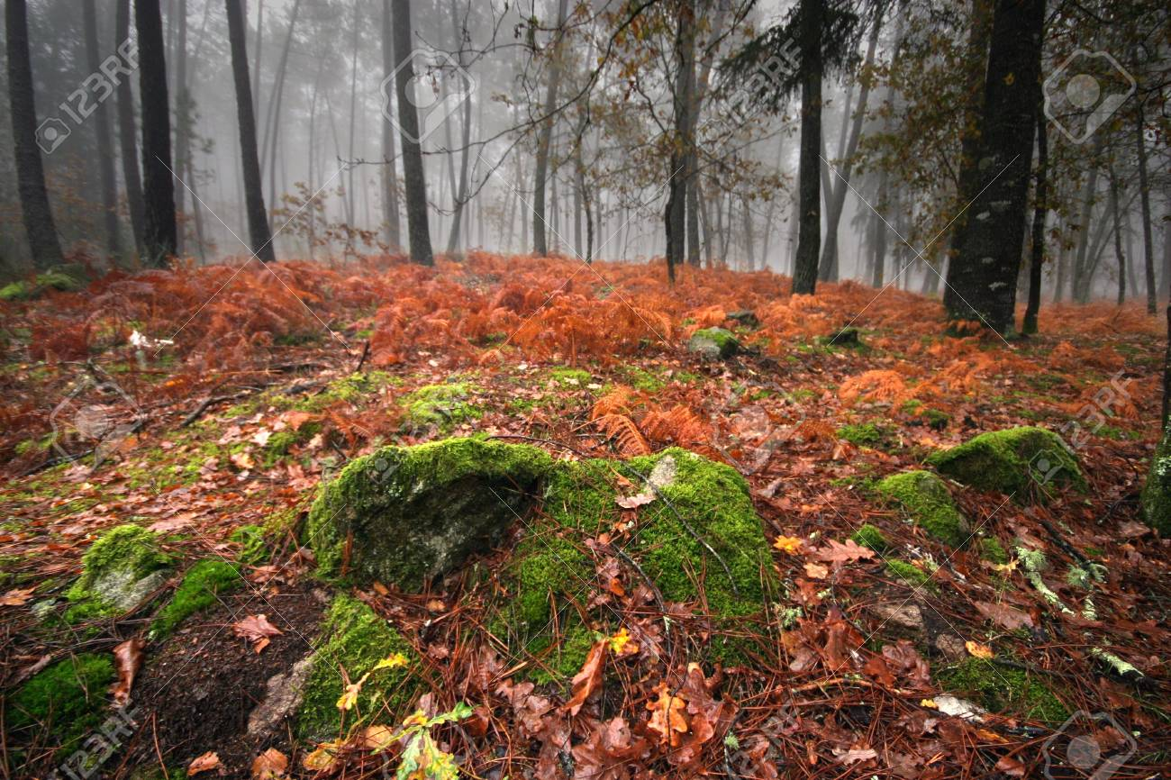 nice and cold autumn landscape Stock Photo - 3069157