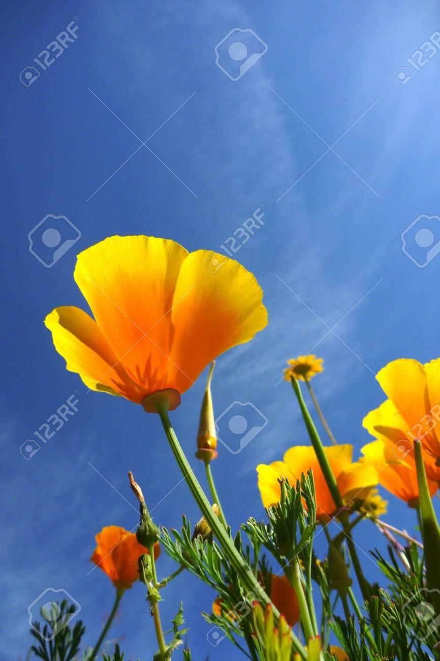Beautiful tulips beautiful flowers nature photo stock photo beautiful tulips beautiful flowers nature photo stock photo 10512751 izmirmasajfo