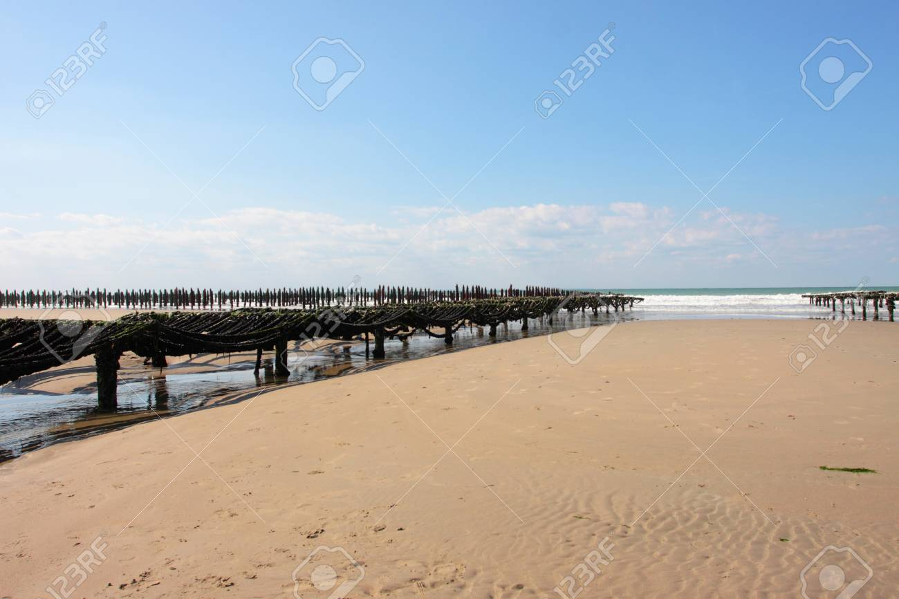 mussel farming on the coast of opal in the north of France Stock Photo - 11265623