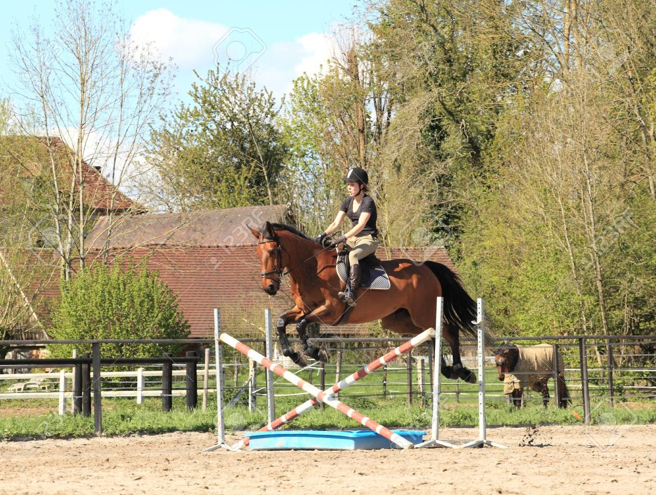 Young woman with a brown horse jump an obstacle Stock Photo - 13702469